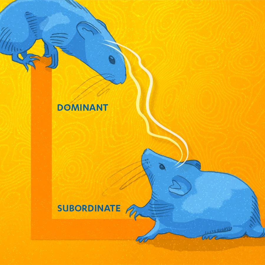 Animal brain synchronization